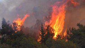 Orman yangınlarıyla mücadelede doğru bilinen yanlışlar