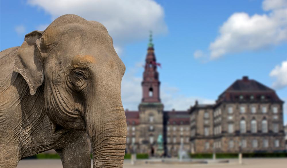 Sirk fili olmayanlar için Danimarka'ya siyasal gezi rehberi