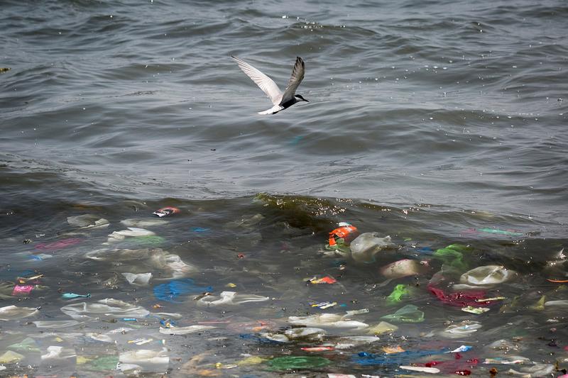 Nükleer atık kadar büyük tehlike: Plastik çöpler ve Türkiye