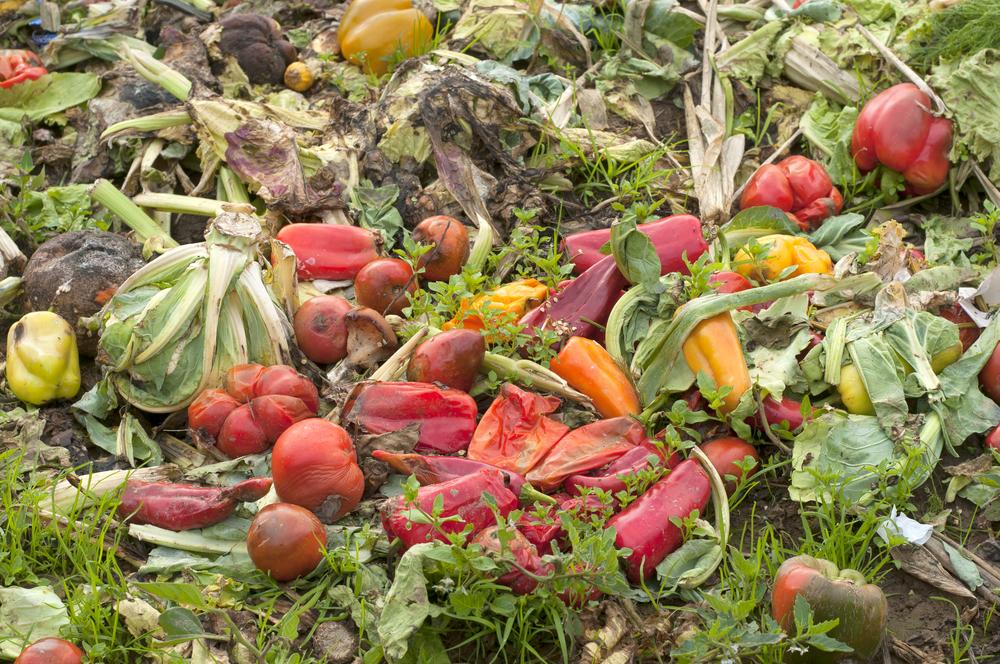 Gıda krizini nasıl önleyebiliriz?